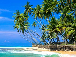 Горящий тур «Шри-Ланка, тур на 11 дней в Хиккадуву»